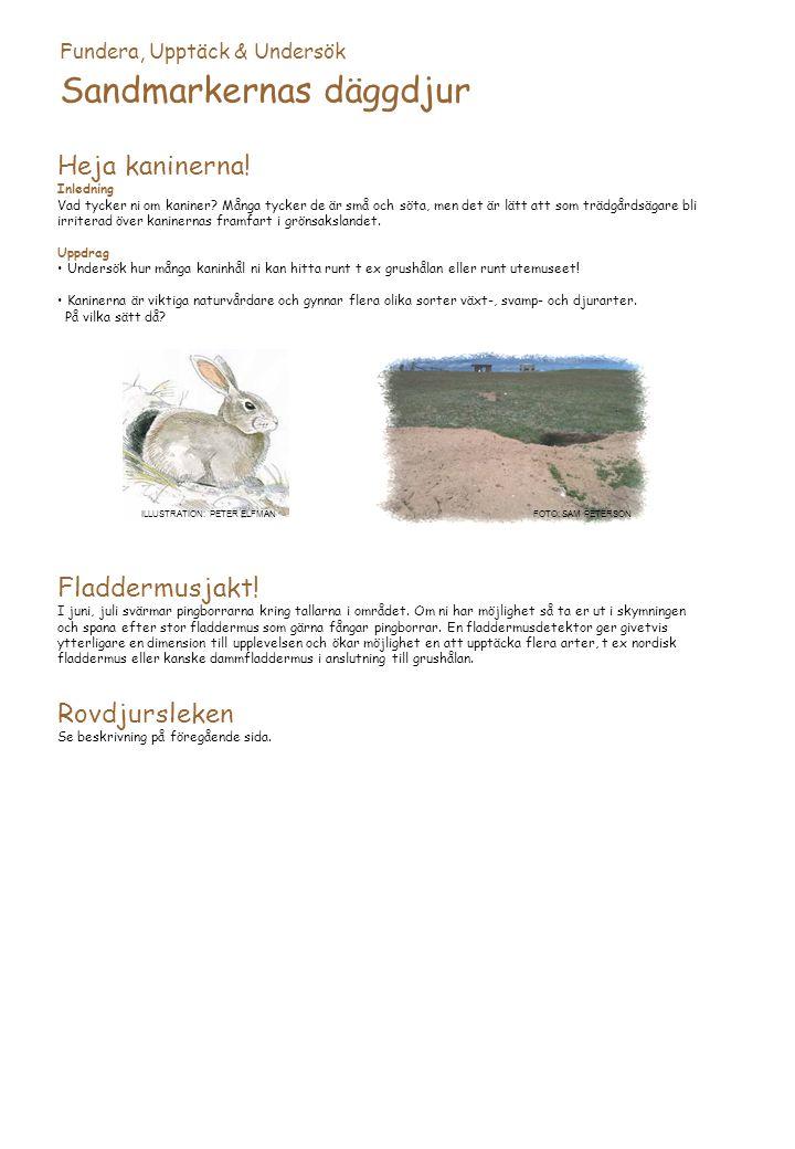 Sandmarkernas däggdjur