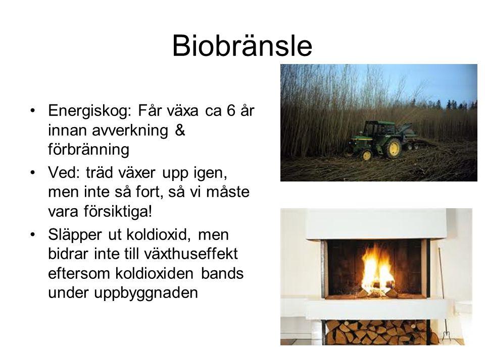 Biobränsle Energiskog: Får växa ca 6 år innan avverkning & förbränning