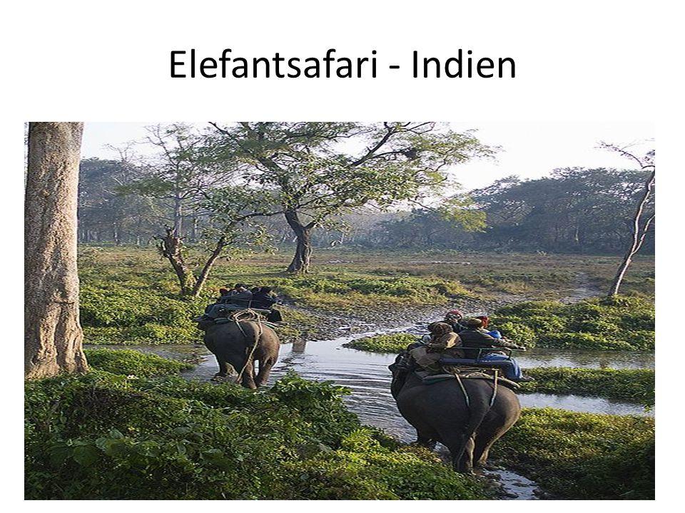 Elefantsafari - Indien