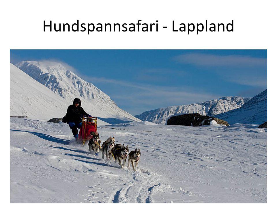 Hundspannsafari - Lappland