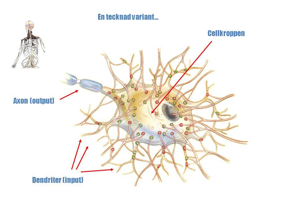En tecknad variant… Cellkroppen Axon (output) Dendriter (input)