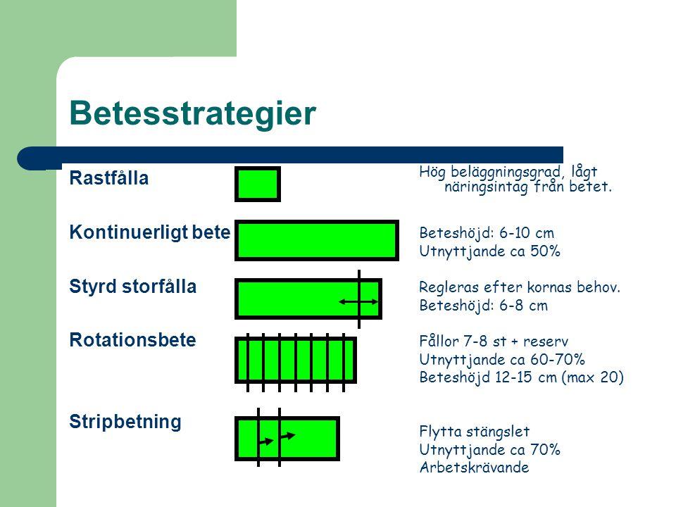 Betesstrategier Rastfålla Kontinuerligt bete Styrd storfålla Rotationsbete Stripbetning Hög beläggningsgrad, lågt näringsintag från betet.