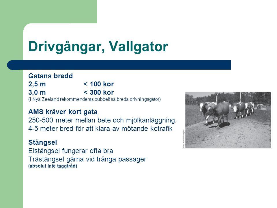Drivgångar, Vallgator Gatans bredd 2,5 m < 100 kor