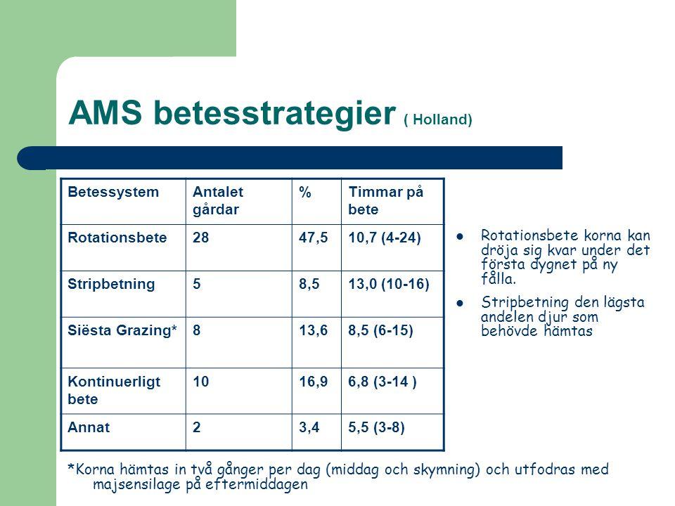 AMS betesstrategier ( Holland)