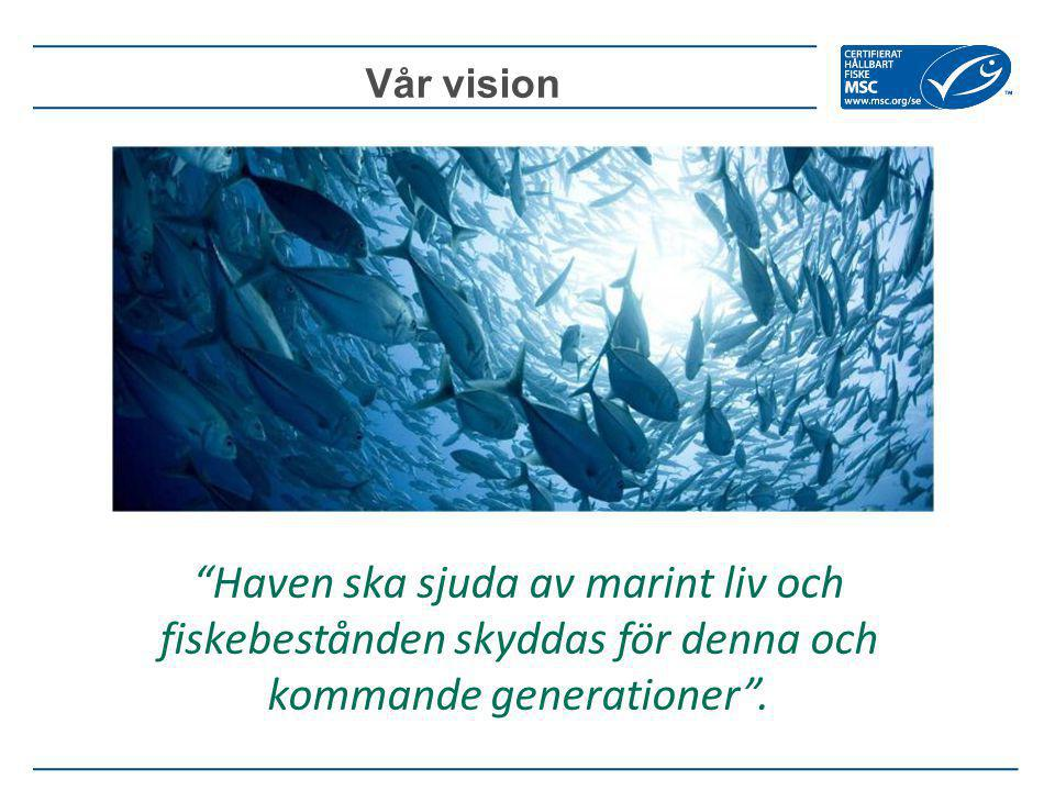 Vår vision Haven ska sjuda av marint liv och fiskebestånden skyddas för denna och kommande generationer .