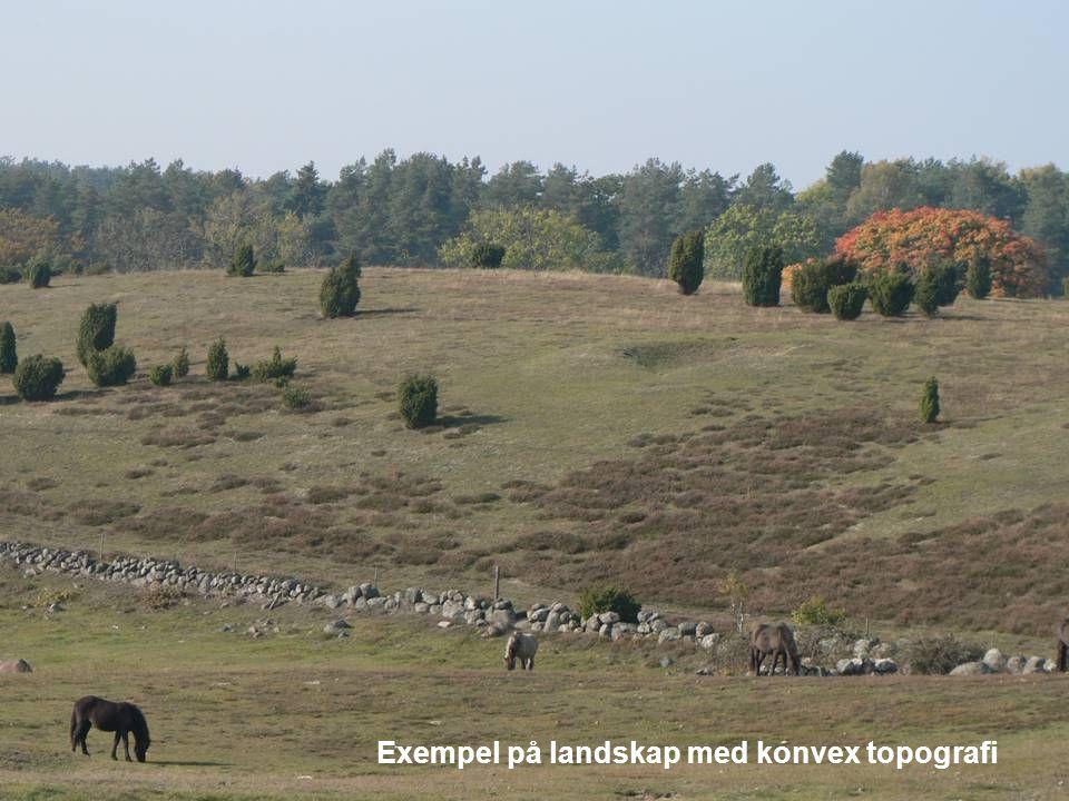 Exempel på landskap med konvex topografi