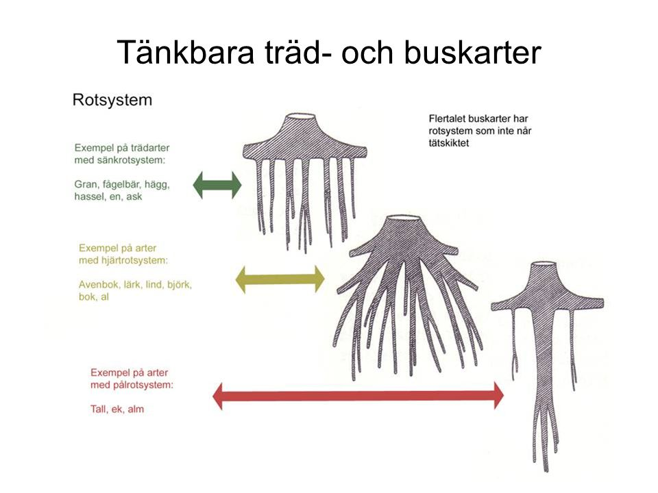 Tänkbara träd- och buskarter
