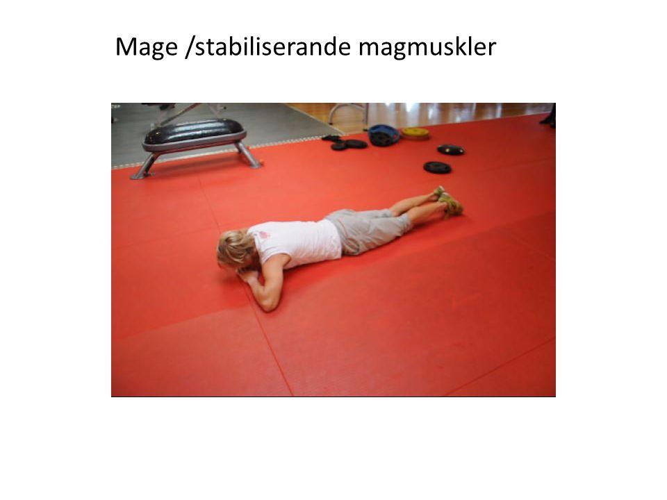 Mage /stabiliserande magmuskler