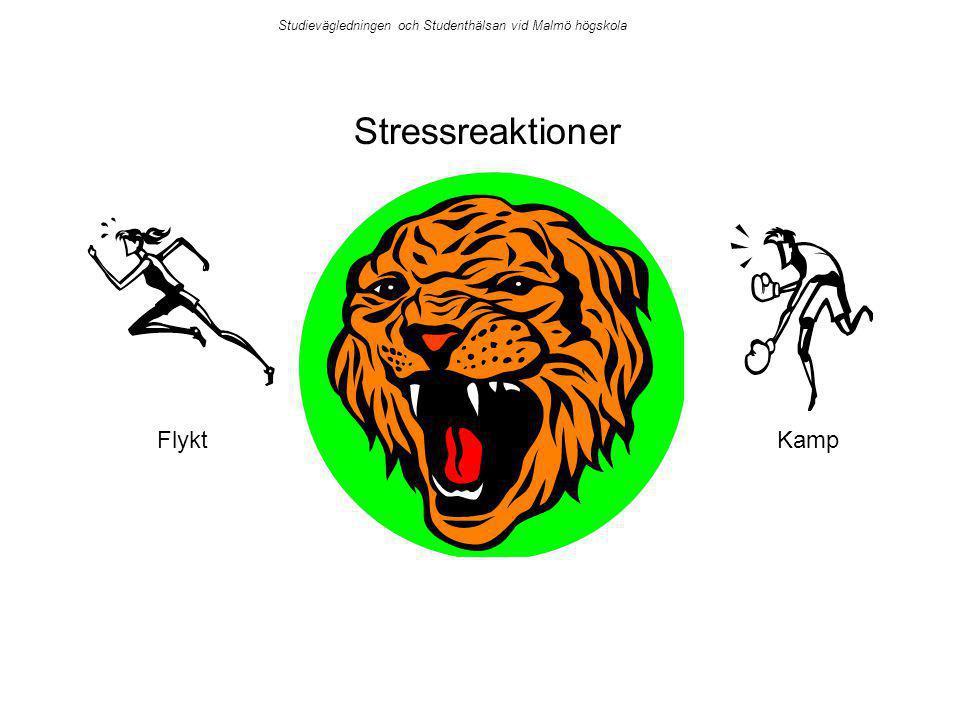 Stressreaktioner Flykt Kamp
