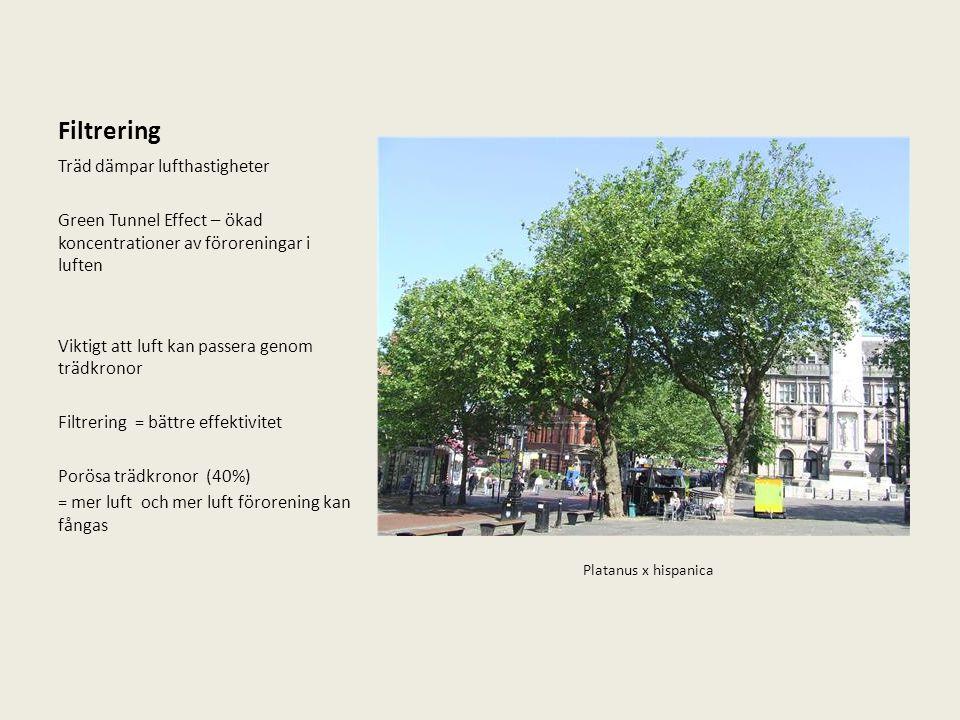 Filtrering Träd dämpar lufthastigheter