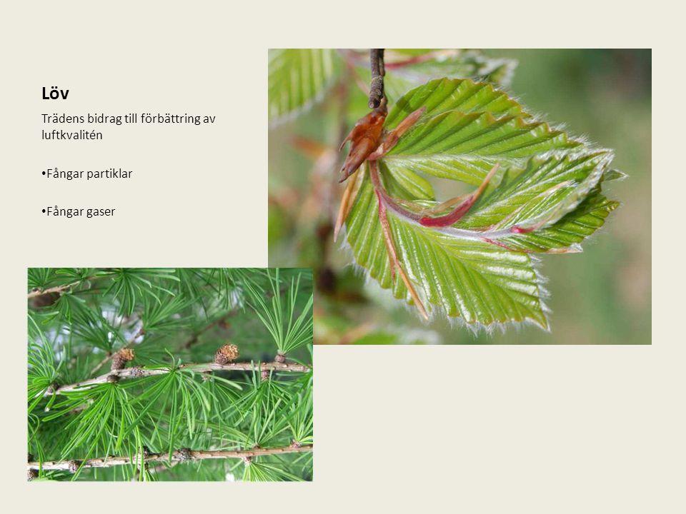 Löv Trädens bidrag till förbättring av luftkvalitén Fångar partiklar