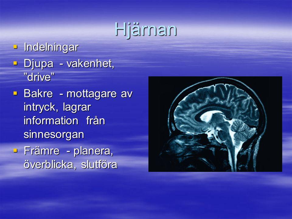 Hjärnan Indelningar Djupa - vakenhet, drive