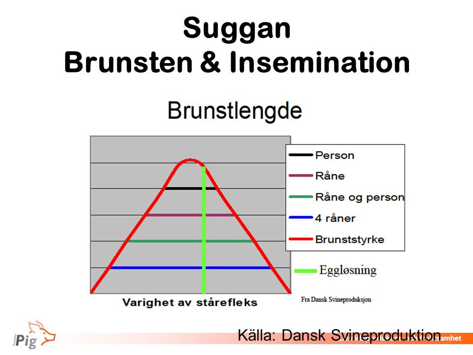 Suggan Brunsten & Insemination