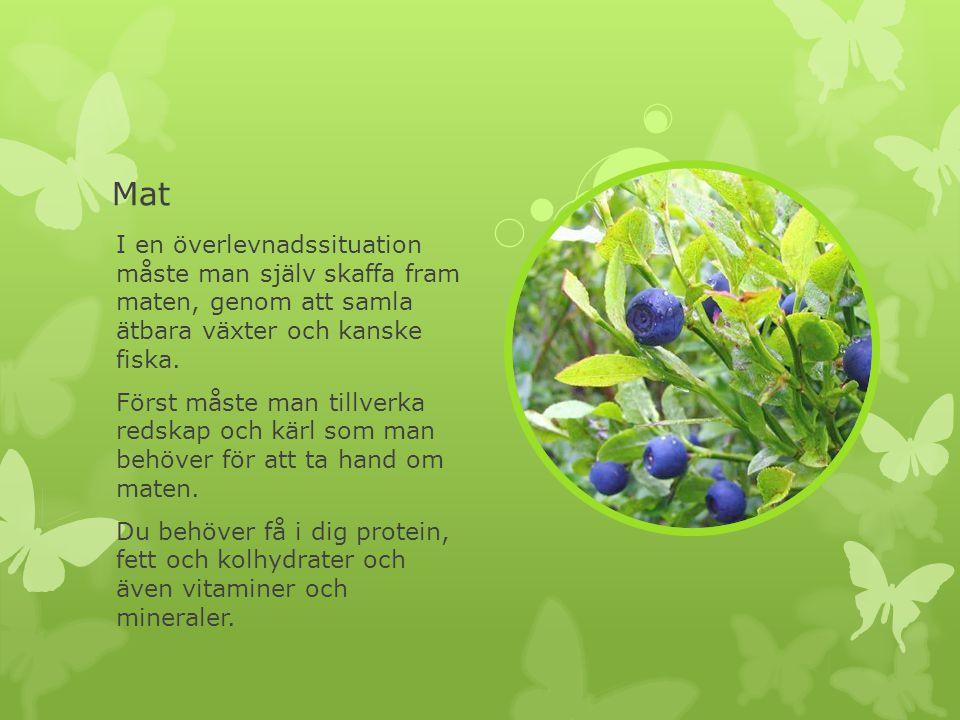 Mat I en överlevnadssituation måste man själv skaffa fram maten, genom att samla ätbara växter och kanske fiska.