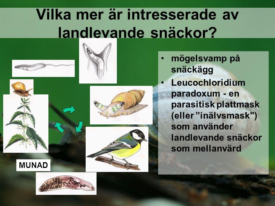 Vilka mer är intresserade av landlevande snäckor