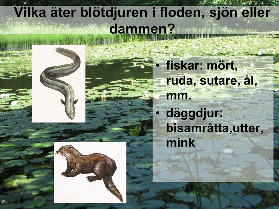 Vilka äter blötdjuren i floden, sjön eller dammen