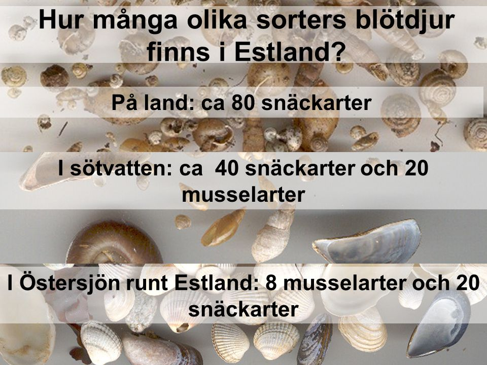 Hur många olika sorters blötdjur finns i Estland