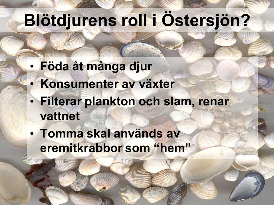 Blötdjurens roll i Östersjön