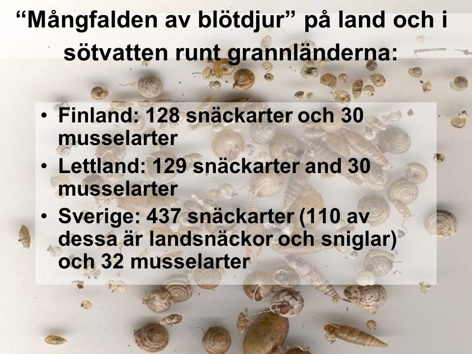 Mångfalden av blötdjur på land och i sötvatten runt grannländerna: