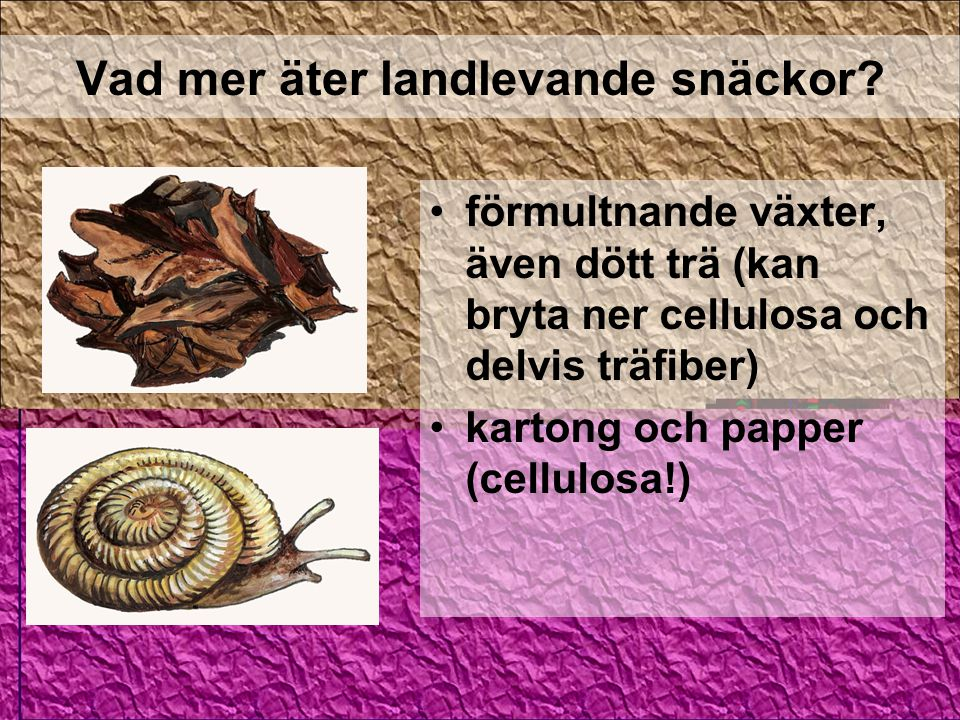 Vad mer äter landlevande snäckor