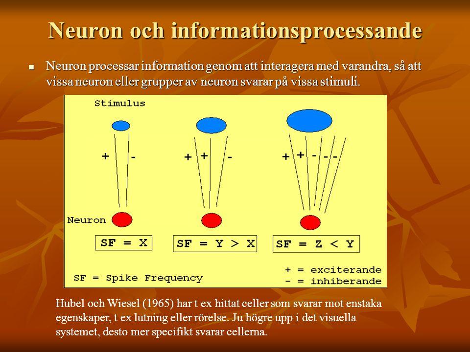 Neuron och informationsprocessande