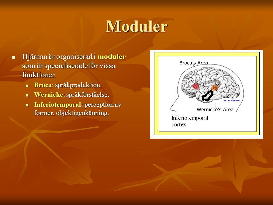Moduler Hjärnan är organiserad i moduler som är specialiserade för vissa funktioner. Broca: språkproduktion.