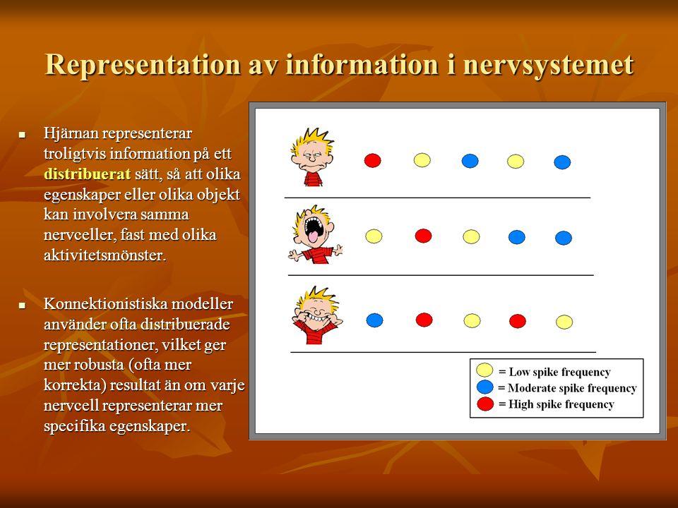Representation av information i nervsystemet