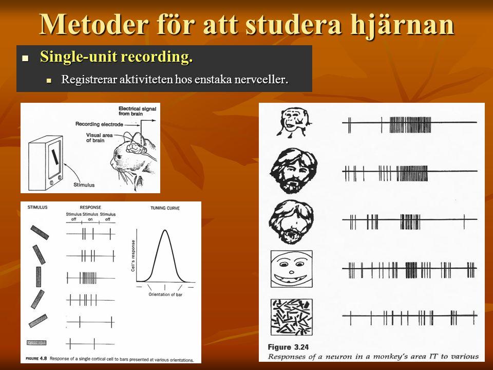 Metoder för att studera hjärnan
