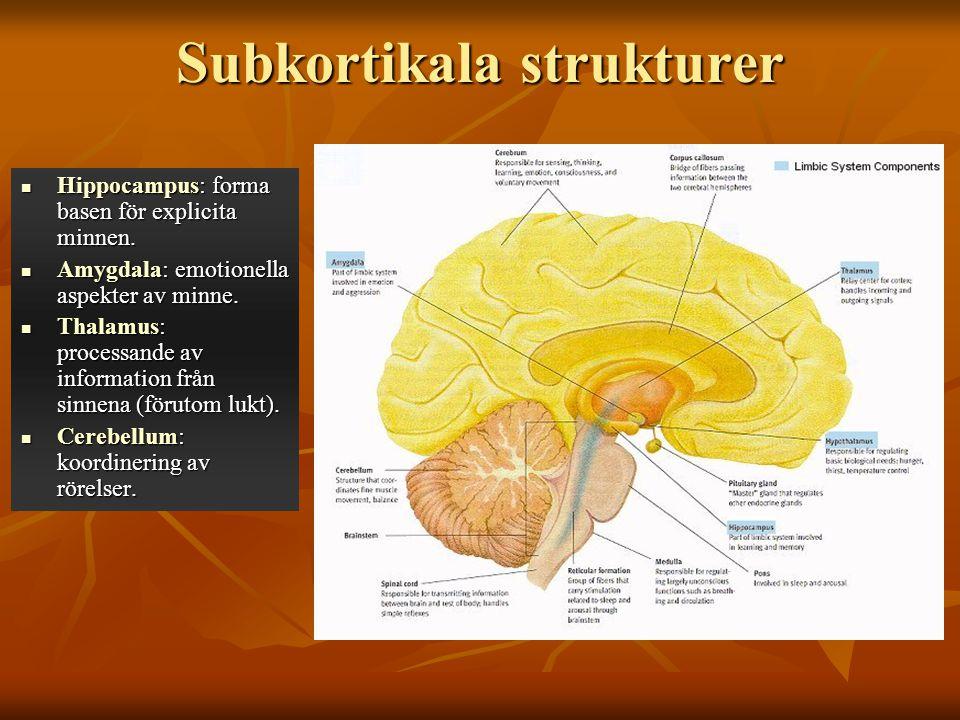 Subkortikala strukturer