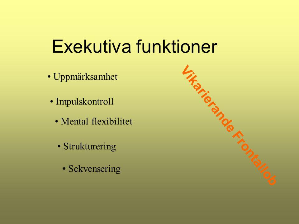 Exekutiva funktioner Vikarierande Frontallob Uppmärksamhet