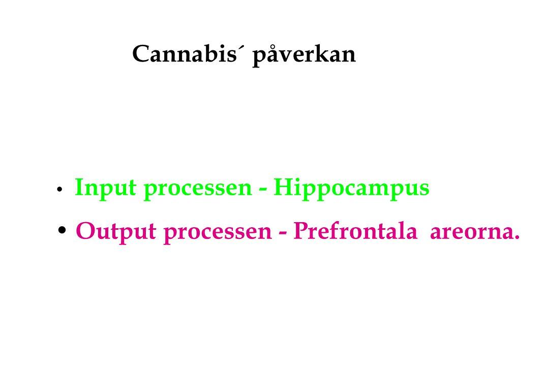 Output processen - Prefrontala areorna.