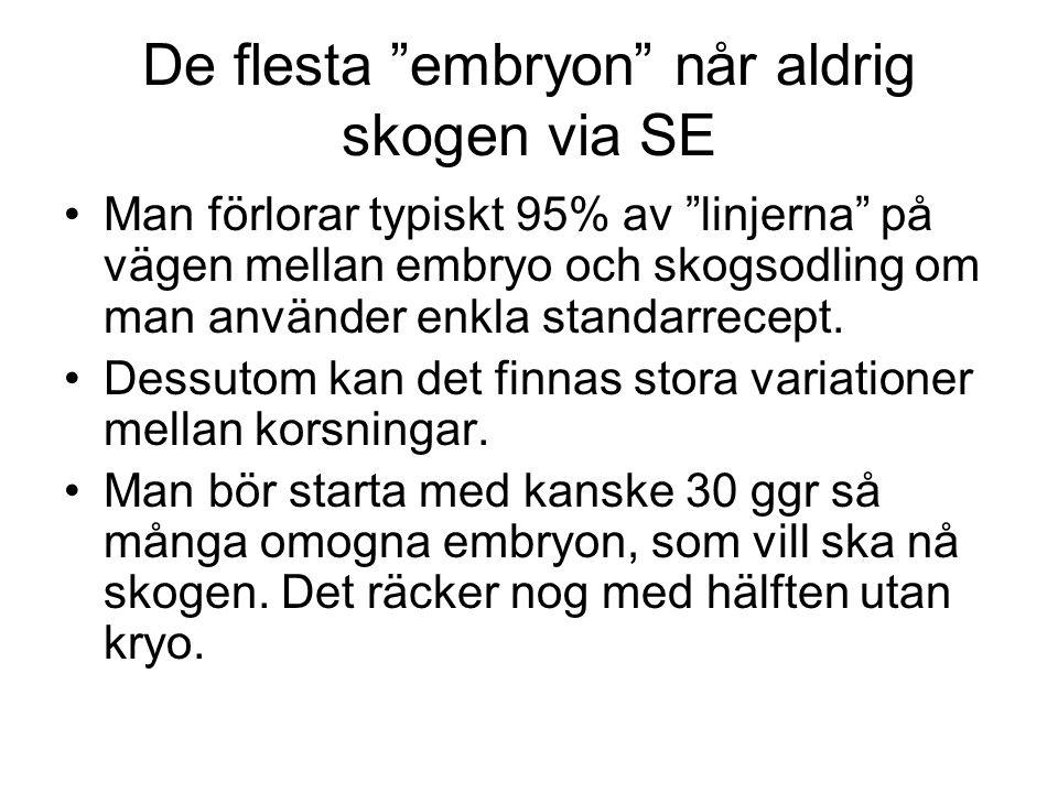 De flesta embryon når aldrig skogen via SE