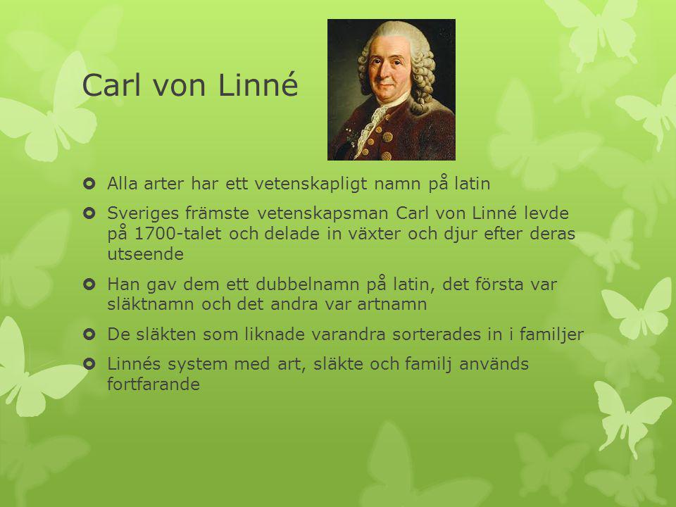 Carl von Linné Alla arter har ett vetenskapligt namn på latin