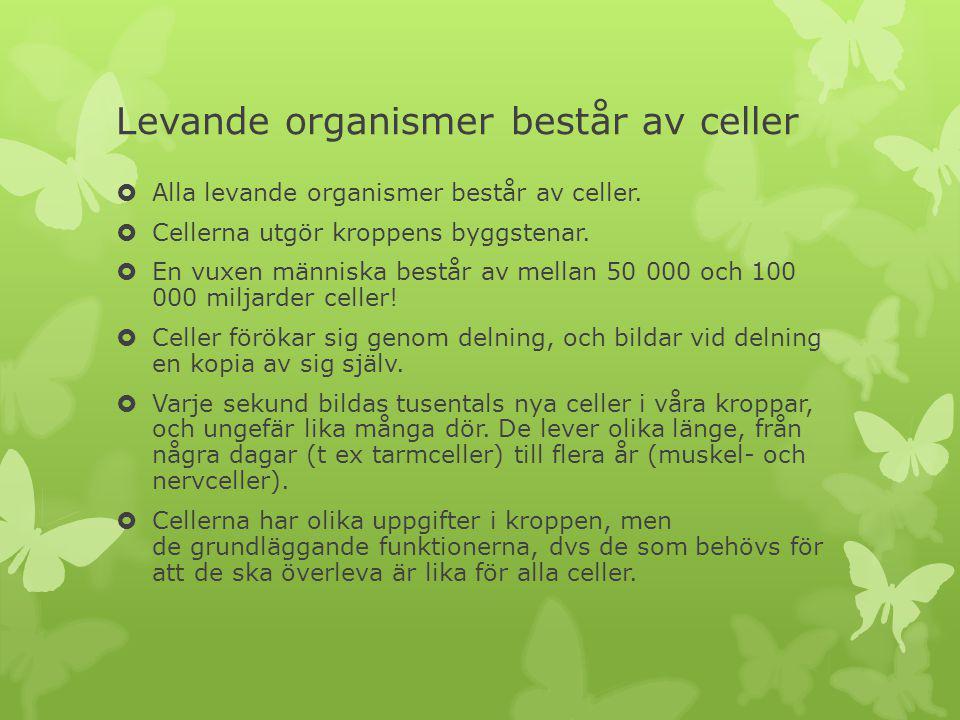 Levande organismer består av celler