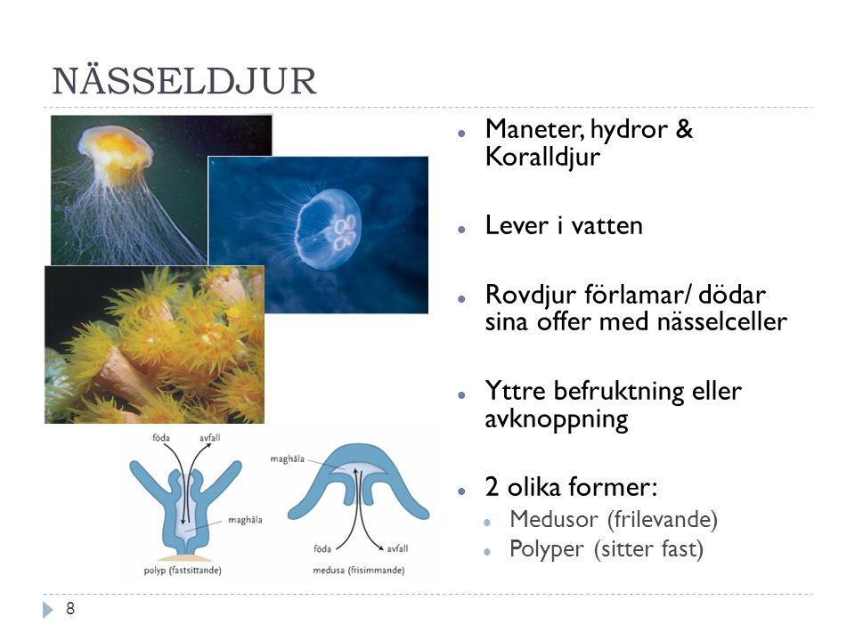 NÄSSELDJUR Maneter, hydror & Koralldjur Lever i vatten