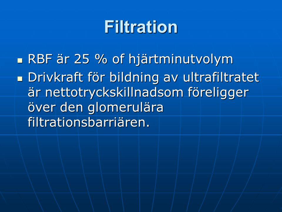 Filtration RBF är 25 % of hjärtminutvolym