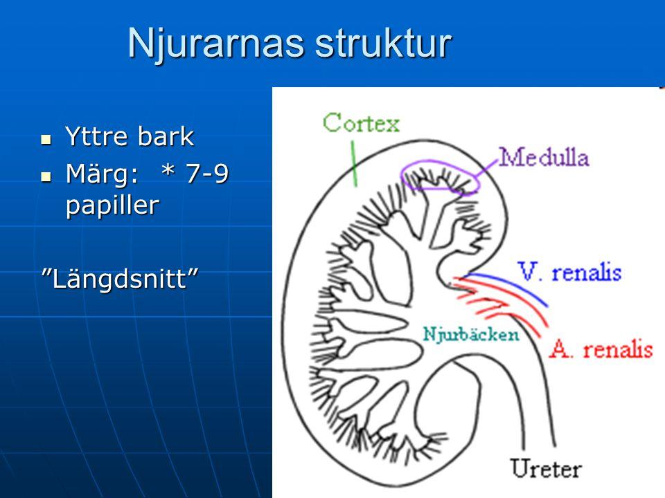 Njurarnas struktur Yttre bark Märg: * 7-9 papiller Längdsnitt