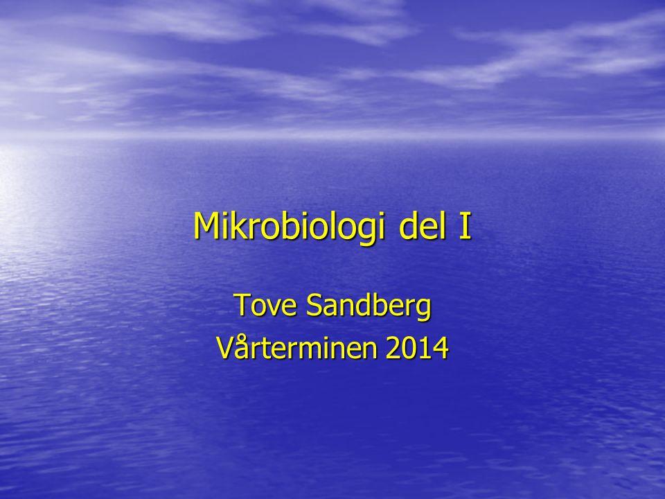 Tove Sandberg Vårterminen 2014