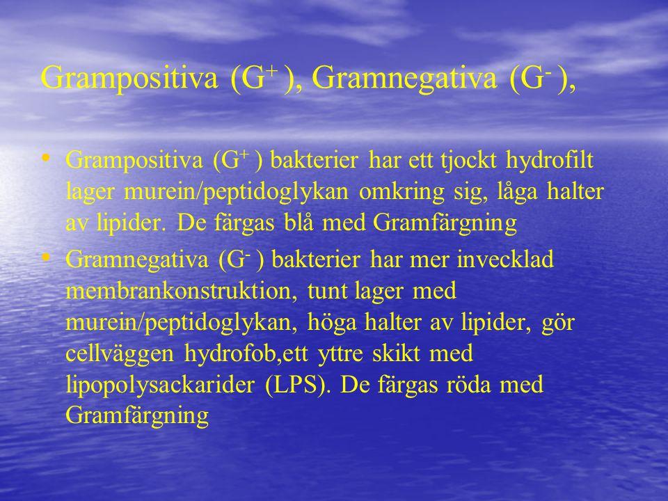 Grampositiva (G+ ), Gramnegativa (G- ),