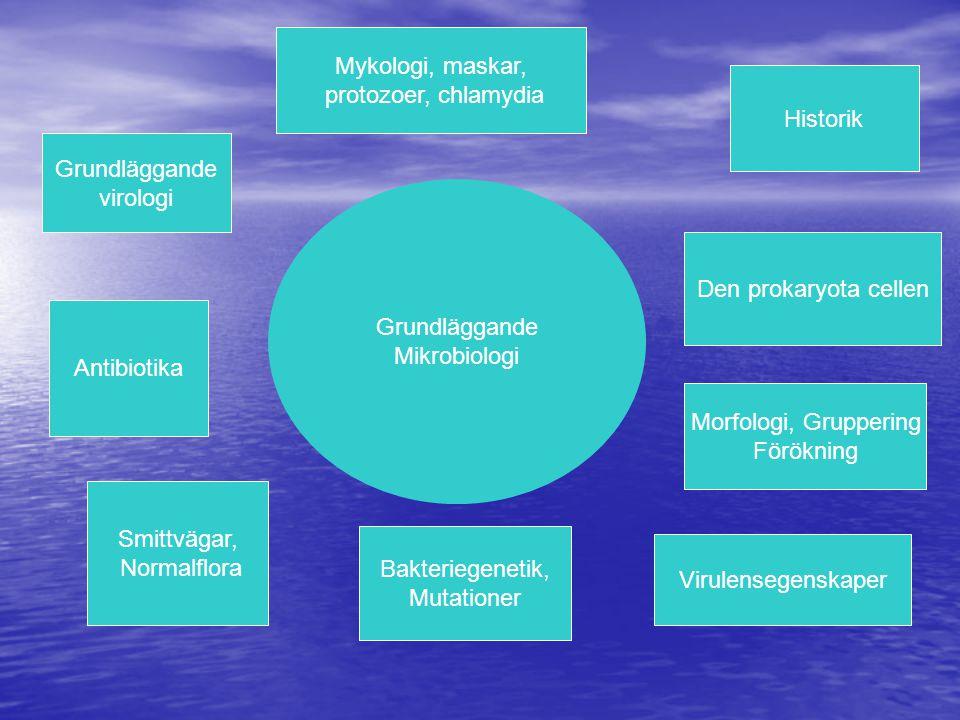 Mykologi, maskar, protozoer, chlamydia. Historik. Grundläggande. virologi. Grundläggande. Mikrobiologi.