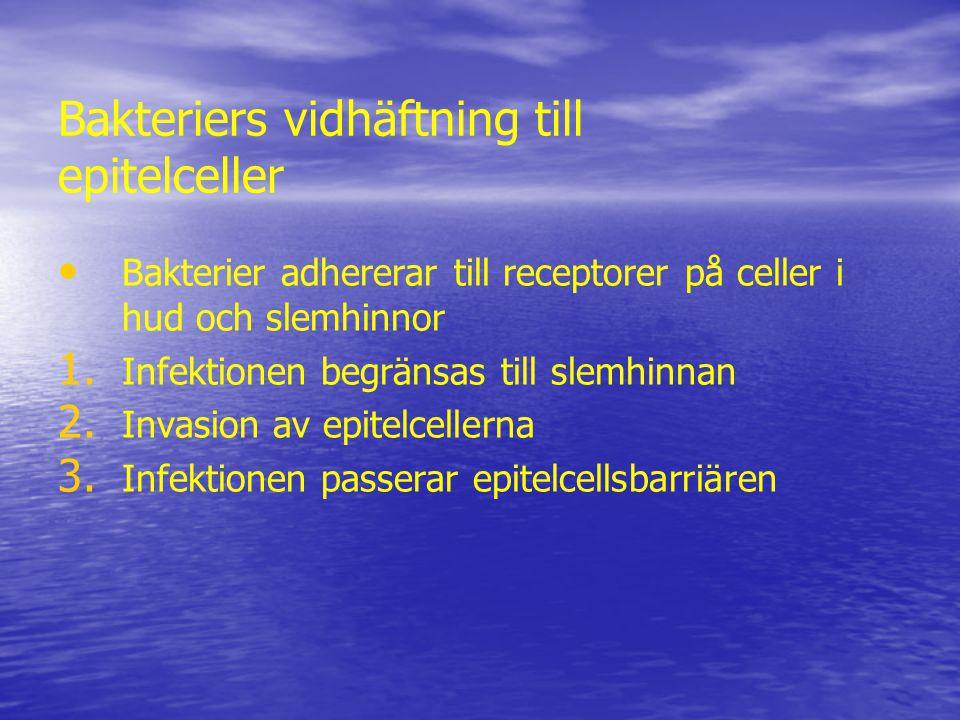Bakteriers vidhäftning till epitelceller