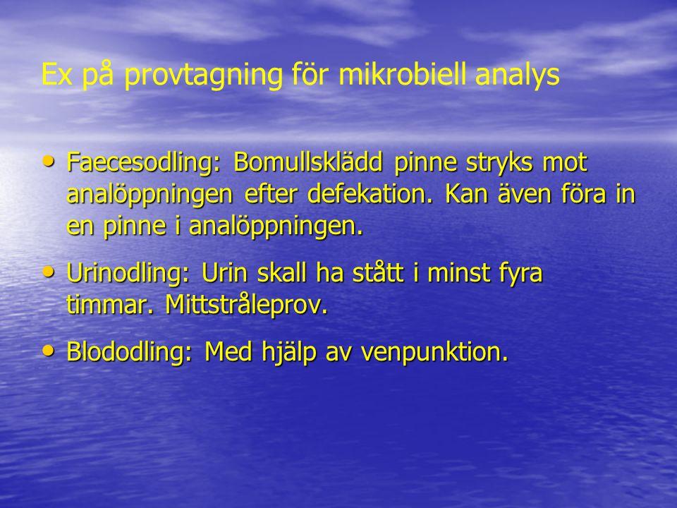 Ex på provtagning för mikrobiell analys