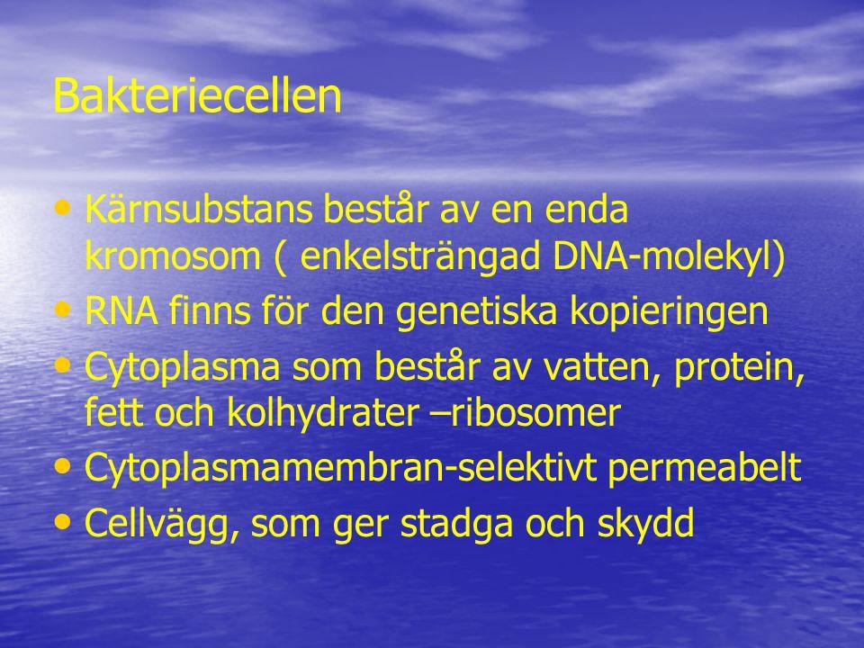 Bakteriecellen Kärnsubstans består av en enda kromosom ( enkelsträngad DNA-molekyl) RNA finns för den genetiska kopieringen.