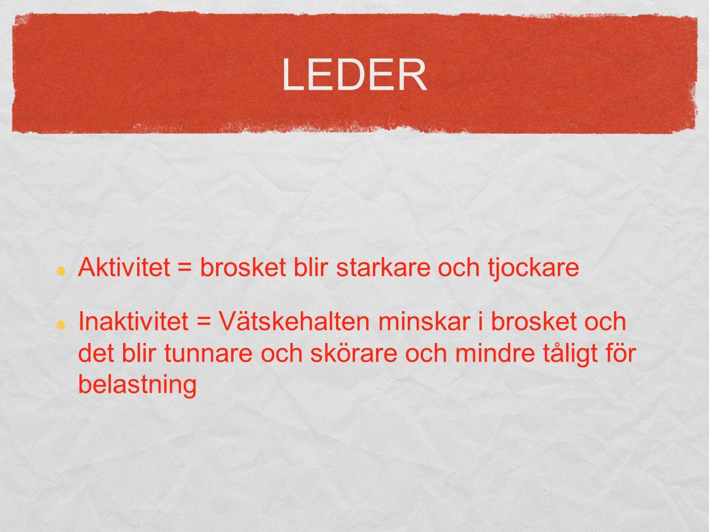 LEDER Aktivitet = brosket blir starkare och tjockare