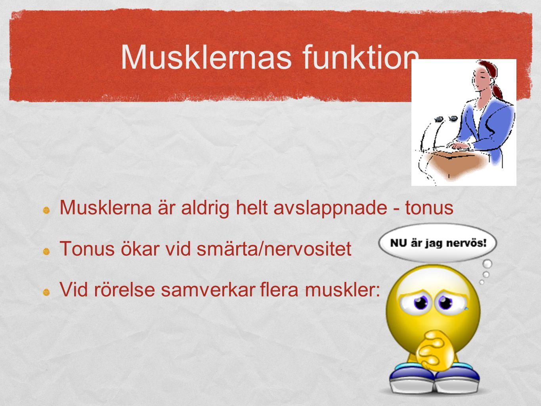 Musklernas funktion Musklerna är aldrig helt avslappnade - tonus