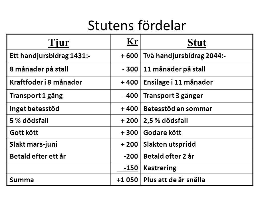 Stutens fördelar Tjur Stut Kr Ett handjursbidrag 1431:- + 600
