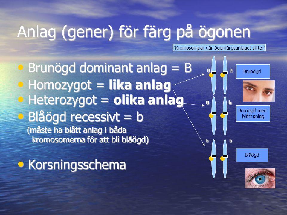 Anlag (gener) för färg på ögonen