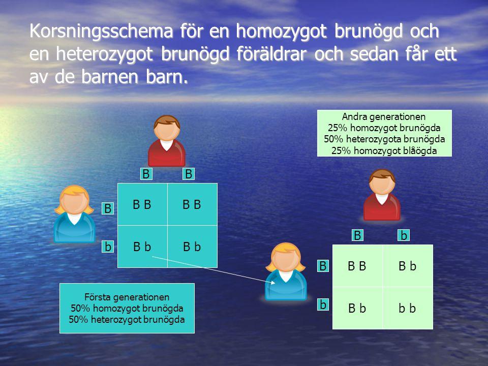 Korsningsschema för en homozygot brunögd och en heterozygot brunögd föräldrar och sedan får ett av de barnen barn.