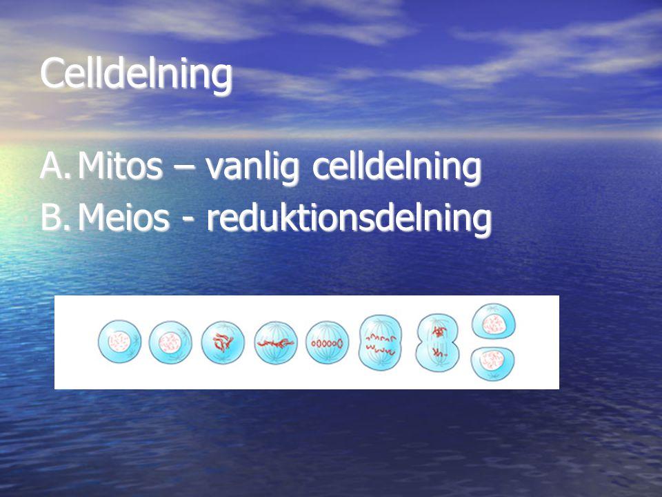 Celldelning Mitos – vanlig celldelning Meios - reduktionsdelning