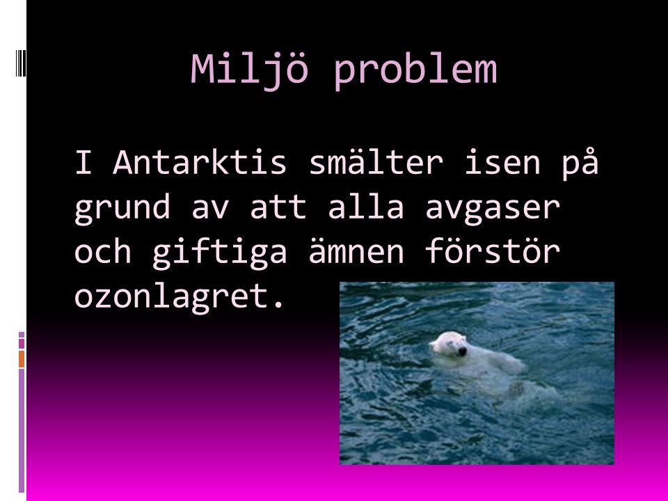 Miljö problem I Antarktis smälter isen på grund av att alla avgaser och giftiga ämnen förstör ozonlagret.